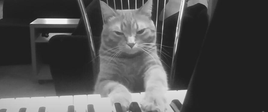Katten Barney spiller duet